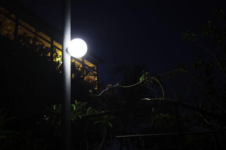 Backyard at night Astronomy Beauty In Nature Flower Fujifilm Growth Illuminated Mood Lighting  Moody Sky Moon Moonlight Nature Night Night Lights Night Sky Night View Nightlife Nightphotography Nightshot No People Outdoors Plant Plants Plants 🌱 Spotlight Tree Neon Life