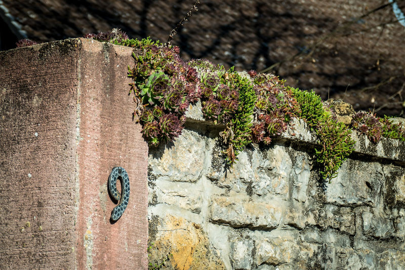 Close-up of flowering plant on wall
