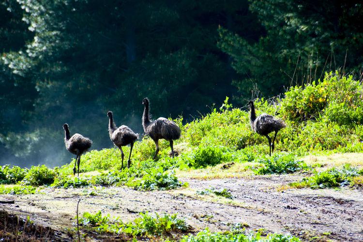 Flock of birds on land