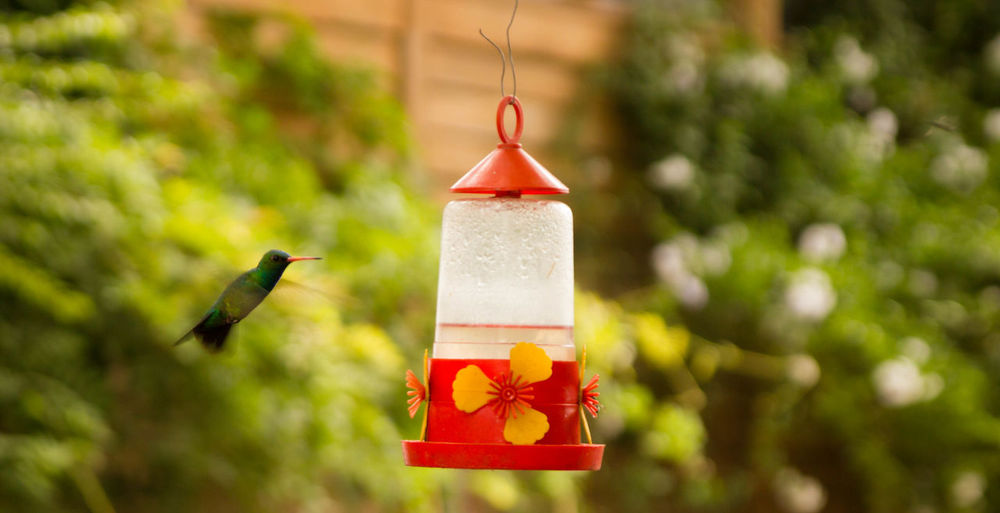 Nature Animal Themes Animal Wildlife Animals In The Wild Bird Colibrí Hummingbird Nature Outdoors Pica Flor