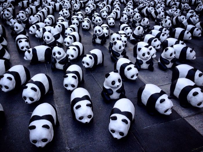 High angle view of panda figurines on floor