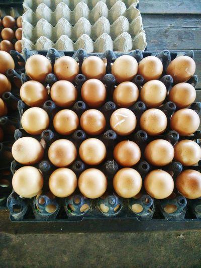 Egg Eggshell Pattern Row