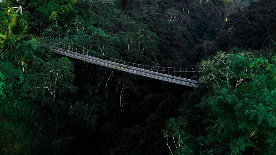 Tree Bridge - Man Made Structure Transportation Plant Forest Beauty In Nature Bridge Connection Green Color Built Structure Growth Land Scenics - Nature Lush Foliage No People Nature Day Foliage Mountain Architecture Outdoors