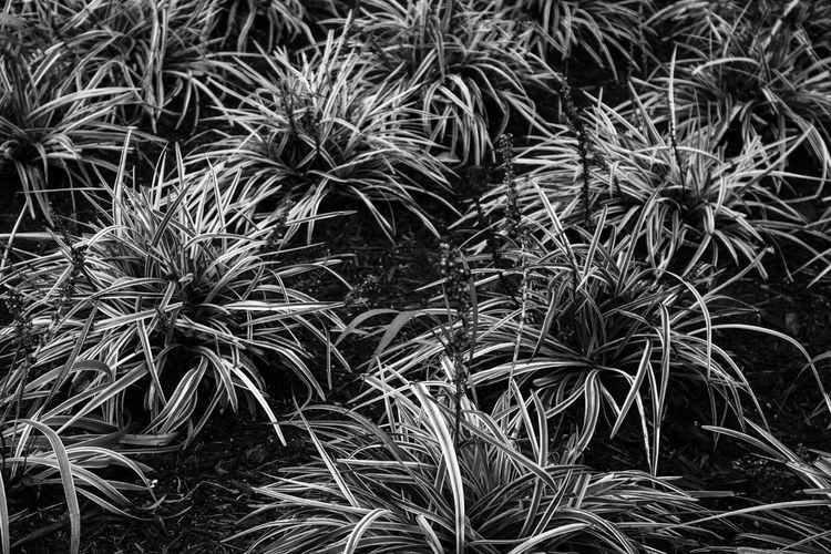 Abundance B Black Blackandwhite Close-up Day Field Focus On Foreground Full Frame Grass Growing Growth Nature No People Outdoors Plant Plants Rain RainyDay Uncultivated Wet Plants Wildlife & Nature Wildlife Photography