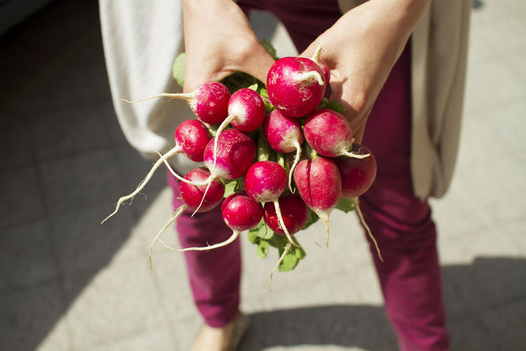 Midsection Of Person Holding Radish