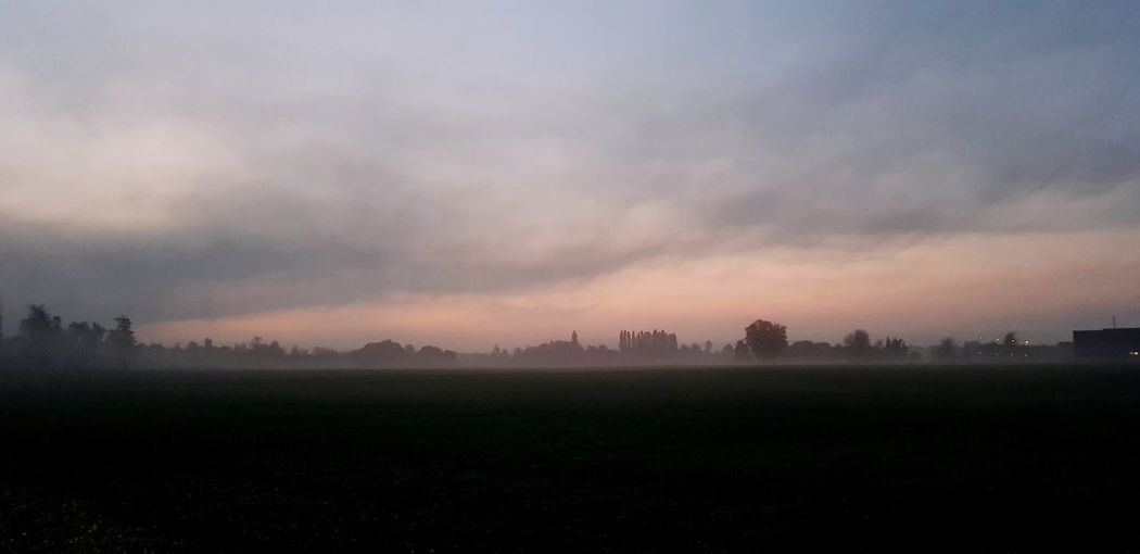 Sunset Fog Tree