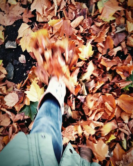 This Is Joy day 1. Kicking Leaves Autumn Leaves Nature Outdoors Fallen Leaves Looking Down Beauty In Nature Surrounded Autumn Colours
