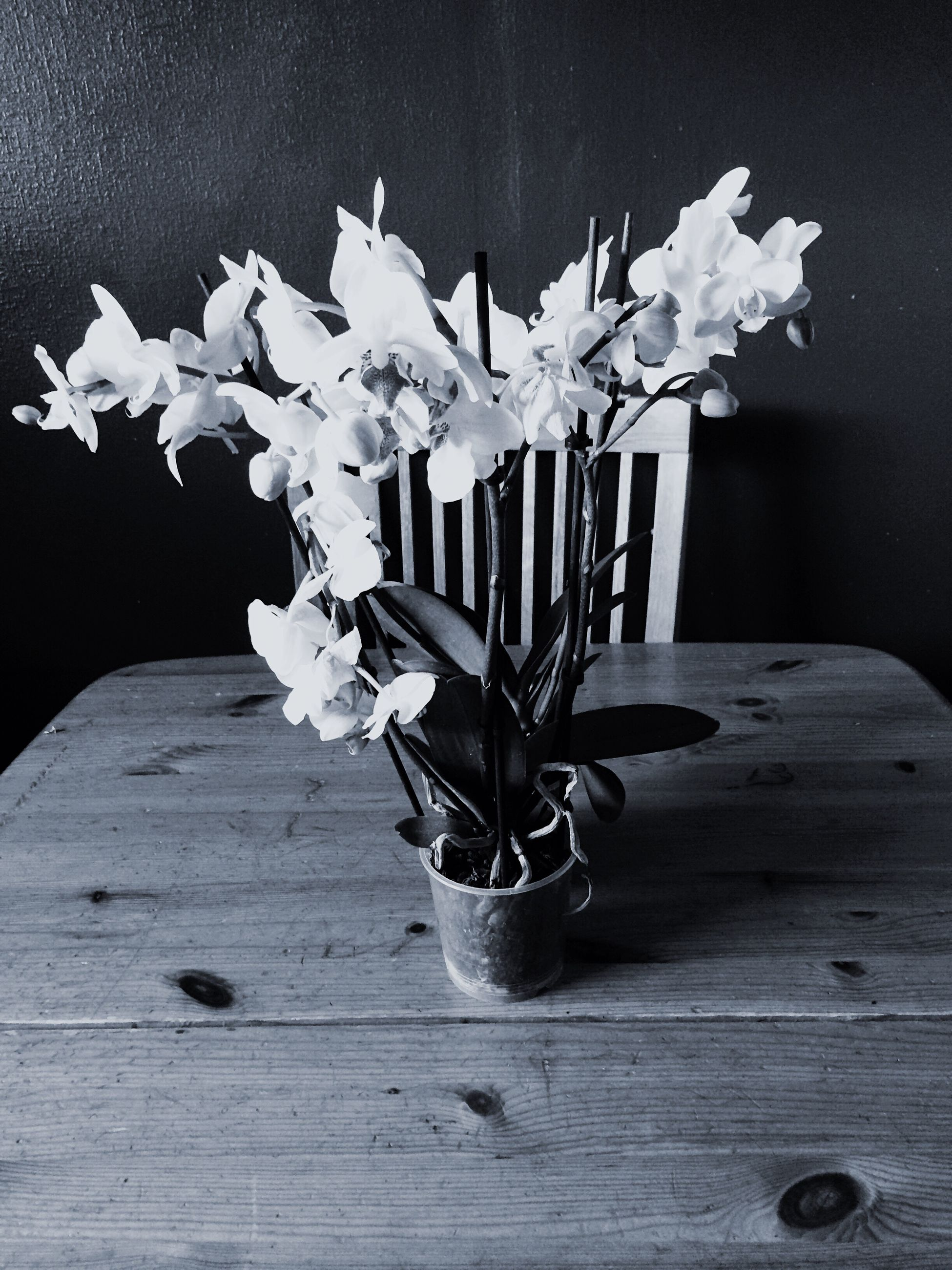 flower, wood - material, wooden, table, indoors, vase, petal, wood, still life, plant, fragility, wall - building feature, close-up, no people, potted plant, freshness, leaf, wall, high angle view, nature