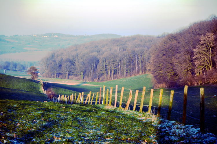 Tree Plant Nature Environment Landscape Tranquil Scene Tranquility Scenics - Nature Sky Beauty In Nature Mountain Barrier No People Day Fog Boundary Fence Land Non-urban Scene Rural Scene Outdoors