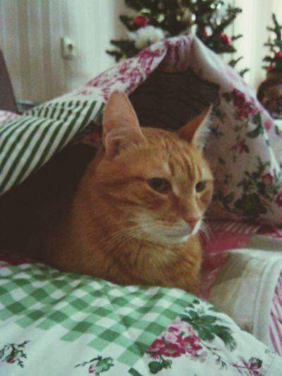 новое покрывало пришлось Паштету по нраву) That's My Cat Home Sweet Home