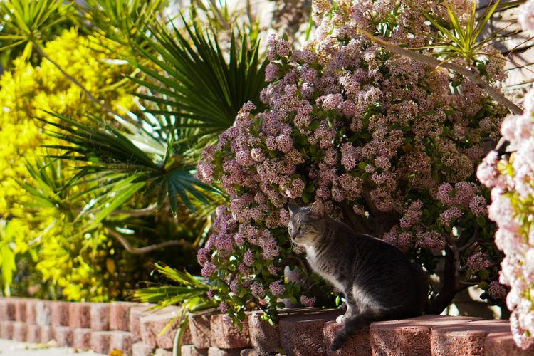 Cat in Bush Pet Pets Cats Feline Cat Shadow Shadows & Lights Tree Flower Palm Frond Palm Tree Tropical Tree