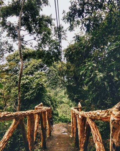 Outdoors Tree Nature Beauty In Nature VSCO Snapseed Freshness Zipline Adventure Nature_collection Snapseed Editing  VSCO Cam Photography Travel Travel Photography The Great Outdoors - 2017 EyeEm Awards