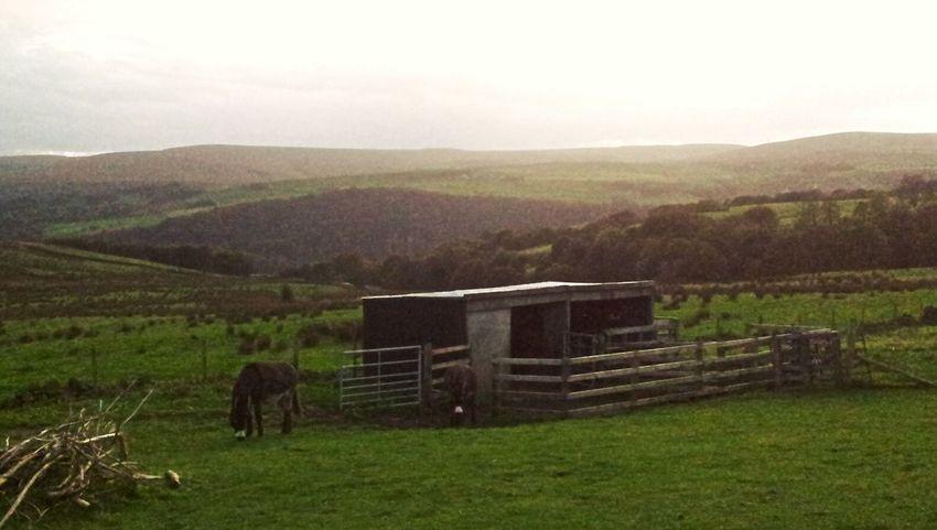 Esel Donkeys English Countryside