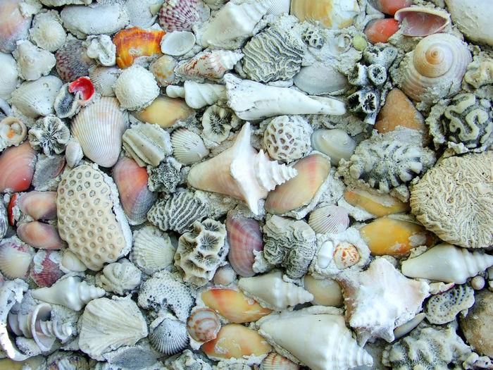 Full Frame Shot Of Various Seashells
