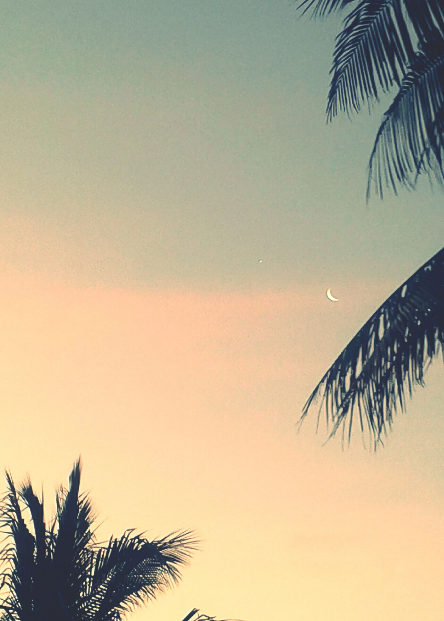 palm tree, tree, sunset, palm frond, palm leaf, silhouette, sky, outdoors, no people, nature, beauty in nature, low angle view, frond, growth, clear sky, tranquility, scenics, leaf, day, close-up