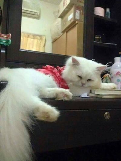 Most Think, beloved 😻😍😘 Goodnight Hello World Cat Sweet Dreams Cat Lovers Kisses❌⭕❌⭕ Missyou I Love My Cats  Photos My Love
