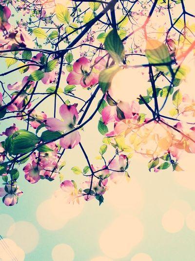 Spring Flowers Hanamizuki