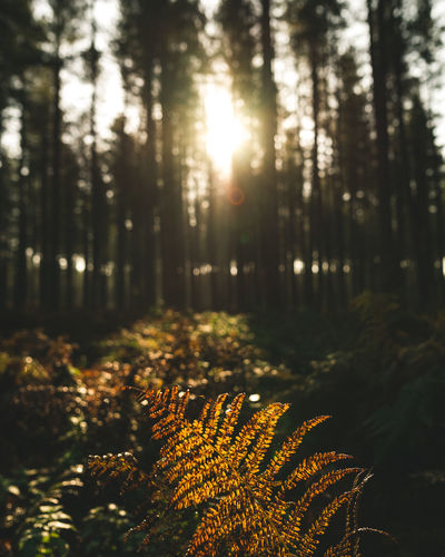 shades of autumn Autumn Autumn Collection Autumn Colors Autumn Leaves Check This Out EyeEm Best Shots EyeEm Nature Lover Landscape_Collection Light Natural Beauty Autumn🍁🍁🍁 Beauty In Nature Depth Of Field Fern Forest Landscape Nature Nature_collection Outdoors Tree Perspectives On Nature