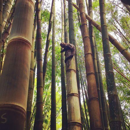 Jardimbotanico Jardimbotanicorj Mico Macaco Ape Monkey Riodejaneiro RJ Brazil Brasil First Eyeem Photo