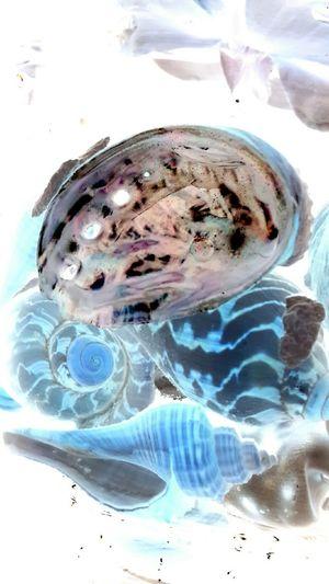Negetive Sea Shells