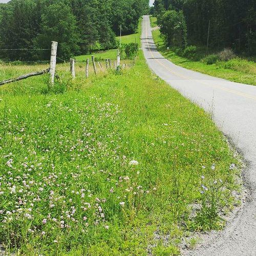 Good morning🌞 Scenic_roads Countryroad Takeadrive Summerdays  Photo Summer Countrylife Thegreatoutdoors-2016eyeemawards