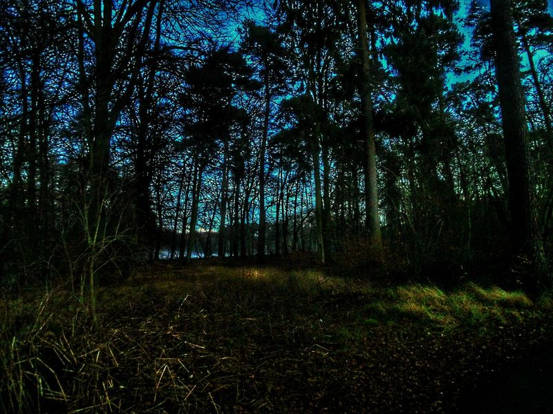 Night Light Early Evening Light Nightscene In The Wood Forest At Night Dreamscape Bright Night Clear Sky Tree Nature Beauty In Nature Growth Landscape No People Tranquil Scene Scenics Tranquility Outdoors Langenselbold Germany🇩🇪 Miles Away Every Picture Tells A Story