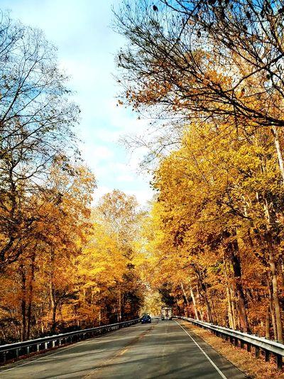 Fall Tree Leaf