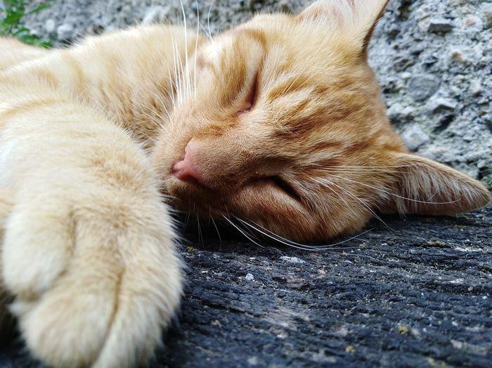 One Animal Domestic Cat Domestic Animals Animal Leg Animal Themes Close-up Pets No People Feline Paw Mammal Indoors  Day Nature