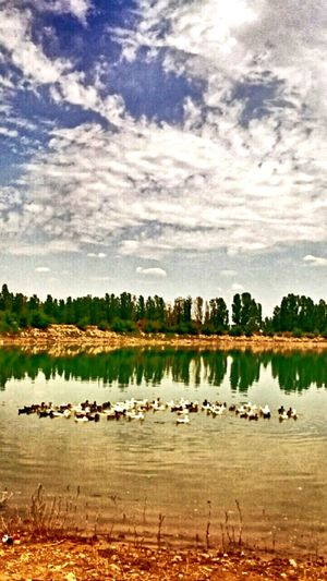 Sivas Turkey Landscape Göl Lake Duck Ordek Clouds
