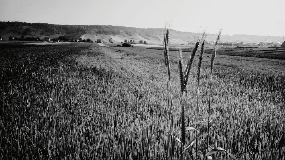 Garb Pińczowski - widok z Kopernii ; Świętokrzyskie Redmi Note 3 + Snapseed Nature Textures Relaxing Beauty In Nature Landscape First Eyeem Photo