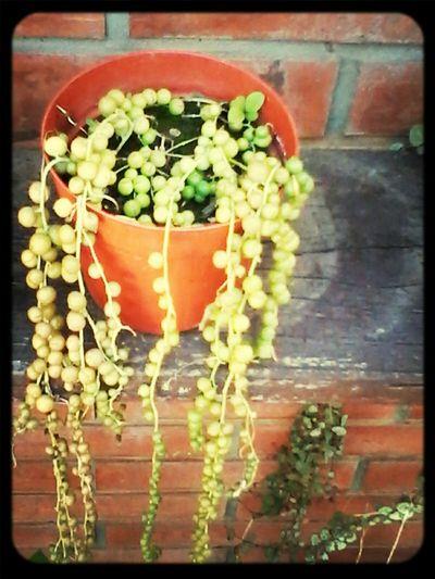Plantas Nature