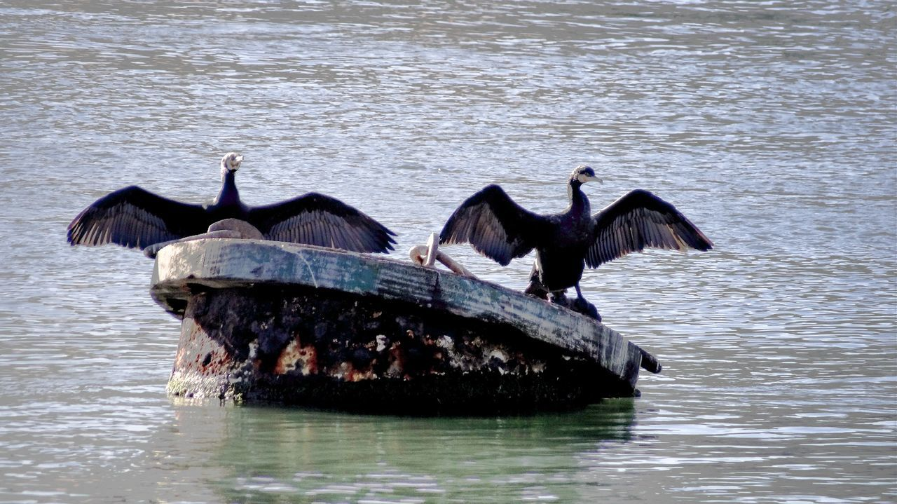 Cormorants With Spread Wings On Built Structure Amidst Sea