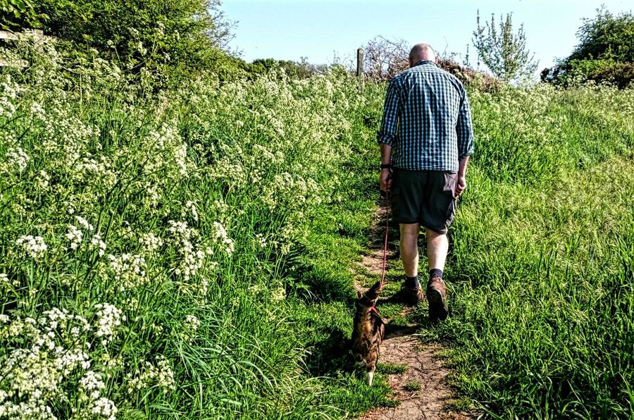 Marley and Kev exploring in the countryside Walking The Cat Cats Cats Of EyeEm Exploring New Ground Strolling Beautiful Day Country Path Enjoying The Sun Fresh Air And Sunshine Cat On A Lead Having Fun The Following