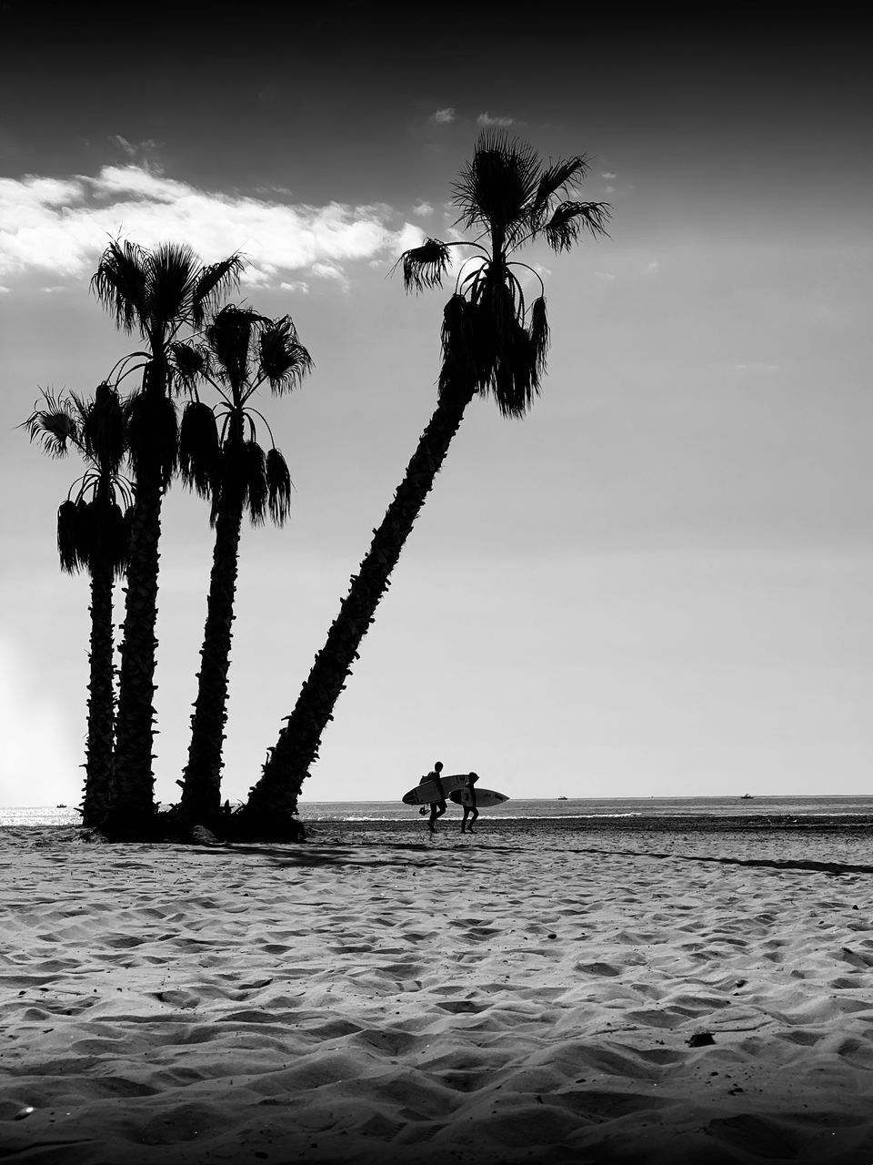SILHOUETTE PALM TREES ON SHORE AGAINST SKY