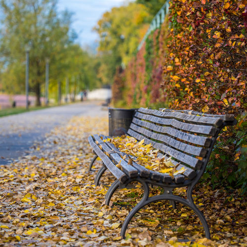 Morning walk in autumn in Berlin, Germany Autumn Leaves Day Morning Sunrise Seat Change Plant No People Nature Absence Empty Park Tree Leaf Park - Man Made Space Yellow Focus On Foreground Plant Part Chair Bench Outdoors Park Bench Ornamental Garden