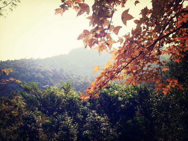 紅葉 Relaxing Autmn Nature HongKong