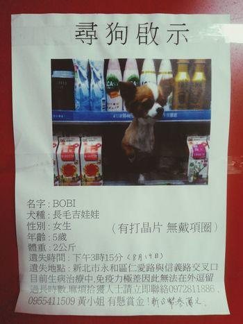 幫幫忙 剛剛在街上看到的 help if you are in taipei, please Angelstth Lost Dog Taiwan Taipei Pets