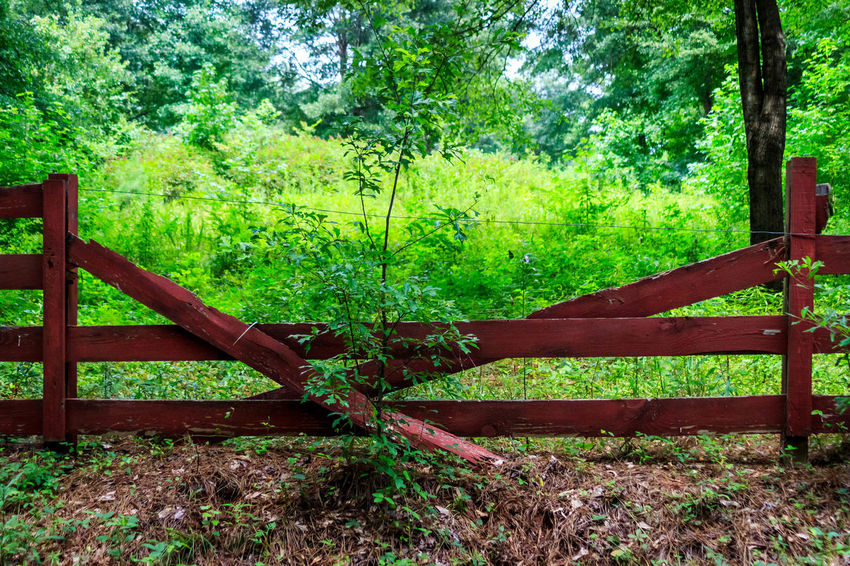 Broken Red Fence Brown Day Fence Green Color Growth Landscape Nature No People Outdoor Outdoors Red Tree