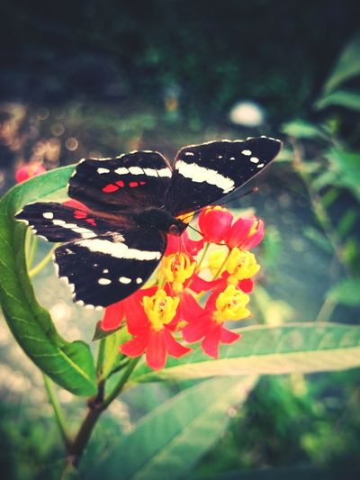 Taking Photos Flowers Nature Butterfly