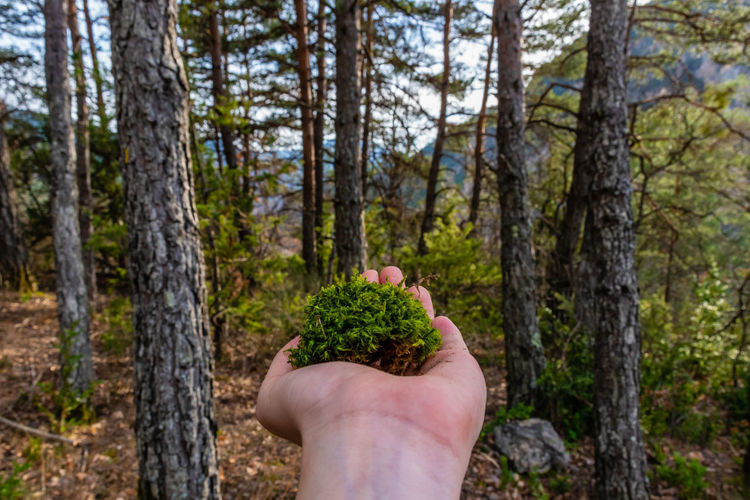 Close-up of woman holding moss against trees at forest