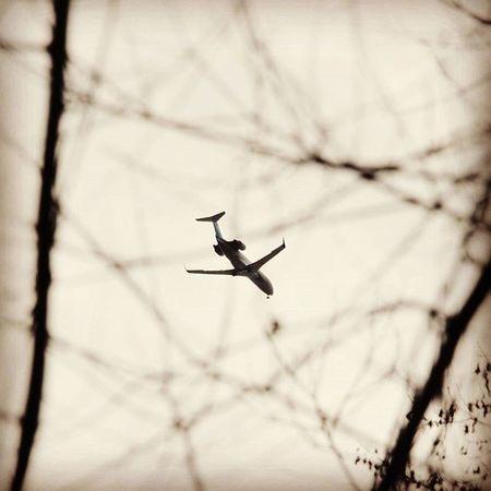 самолет сквозь решетку сквозьрешетку проволока ограда паутина заключение тюрьма небо свобода теснота надежда весна Plane Airplane Fence Wire Freedom Conclusion H Hope Believe Liberty
