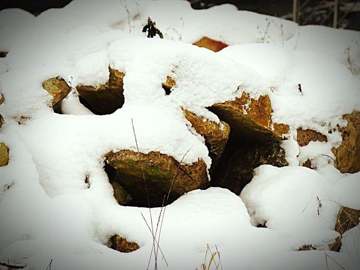 Deutschland Retzstadt PowerShot SX60HS Taking Photos My Unique Style Enjoying Life Hello World Check This Out Winter Garten My Garden Steine Stones