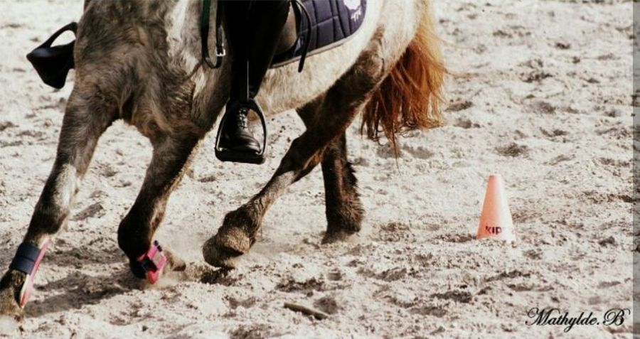 Love Sport Competition Horse Riding Art Horse Picture Pet Sun Color Art Picture Horse Photography  Beautiful Best Horse Foot Horse Photography