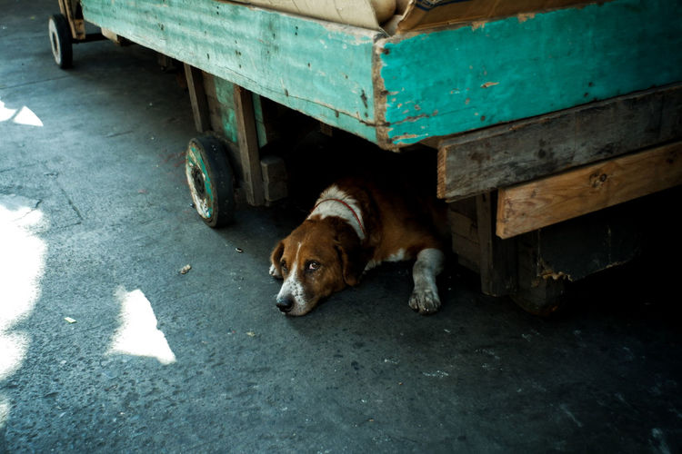 Portrait of dog relaxing on street in city
