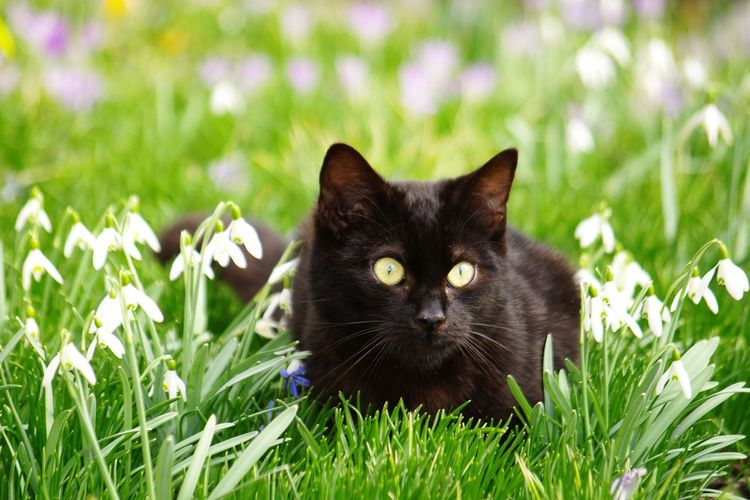 Close-up of cat looking away while sitting on grassy field