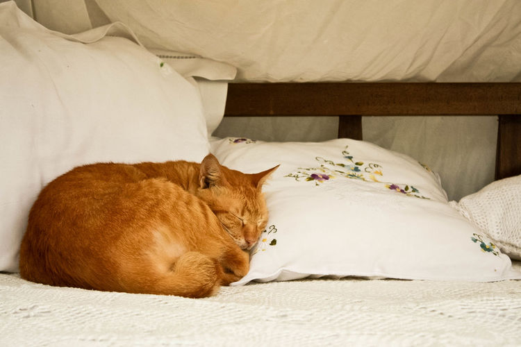 Animal Themes Bed Bedroom Cat Domestic Animals Domestic Cat Feline Indoors  Mammal No People One Animal Pets Pillow Relaxation Sleeping Sleeping Cat