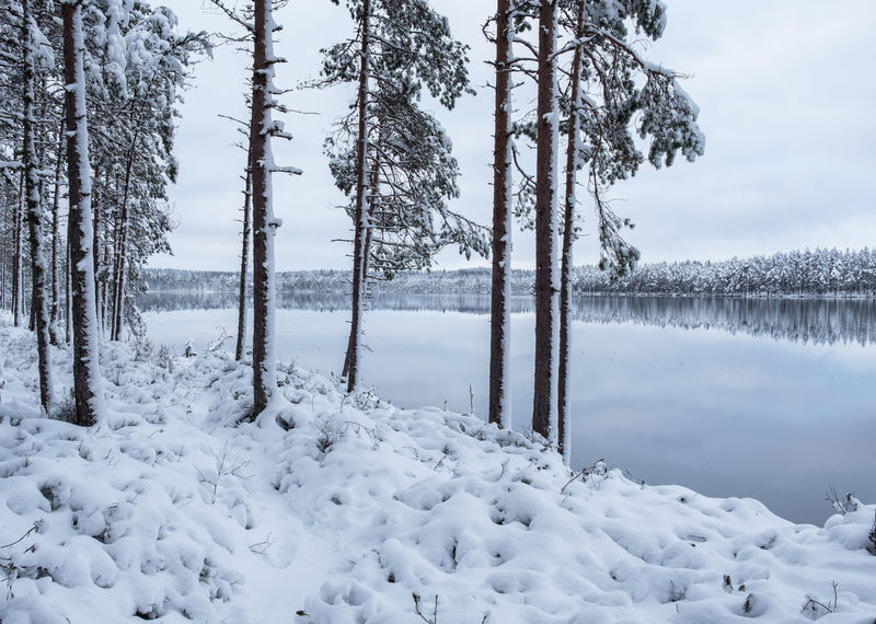 Winter landscape with lake and snow at winter evening in Finland Finland Light Moment Of Silence Pure Tranquility Beauty In Nature Blue Cold Temperature Frozen Landscape Mood Nature Outdoors Peaceful Scenics Snow Snowy Standing Water Tranquil Scene Tranquility Tree Tree Trunk Water Weather Winter