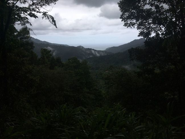 Dominica Adventure Beauty In Nature Challenge Day Forest Freshness High Mountain Nature No People Outdoors Peak Sky Tree