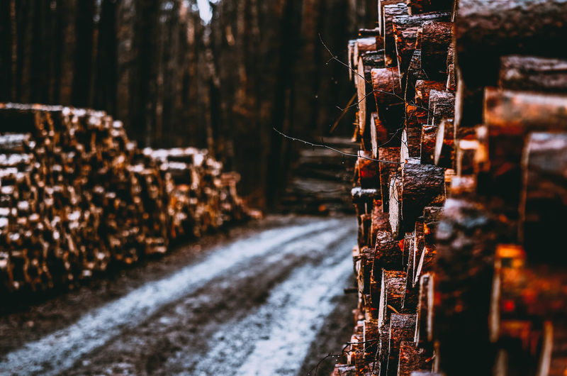 Selective Focus No People Day Abundance Outdoors Nature Spirituality Winter Belief Focus On Foreground Cold Temperature In A Row Metal Large Group Of Objects Close-up Religion Tree Rusty Business Wood - Material Wildlife Poland Poland Eyeem Kaszuby Passion