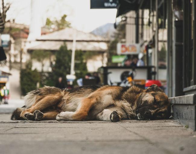 Cat sleeping in a city
